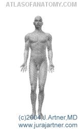 Anatomy Basics - Standard Anatomic Position